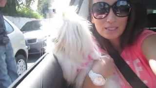 Бразильский Vlog: Гуляем с Mimi (мальтезе)
