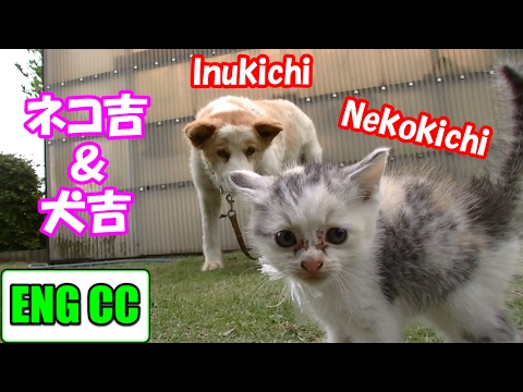 neko-cat's-very-first-meeting-with-inu-kichi【eng-cc】