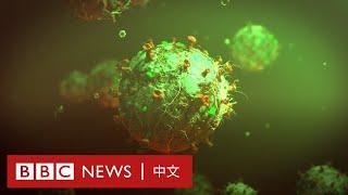 新冠疫情:下一場全球大流行疫情會從哪裡來?- BBC News 中文 - YouTube