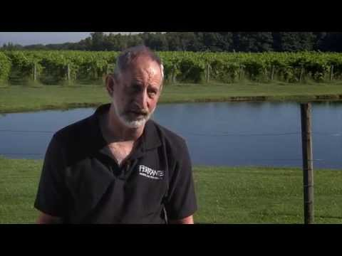 Serving, Growing Ohio's Grape and Wine Industry