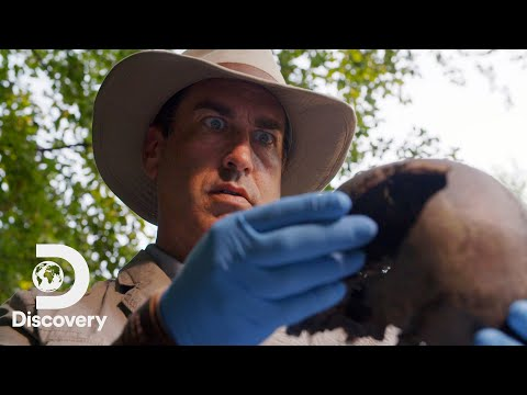 First Look: Rob Riggle: Global Investigator