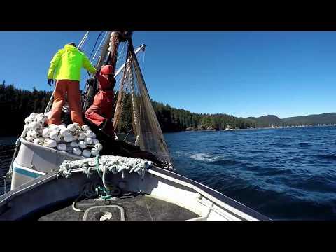 Kodiak Salmon Flare Opener 2018