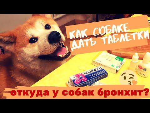 Как дать собаке таблетку   Откуда у собак бронхит   Как дела у Сату? Акита ину