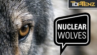 10 Crazy and Terrifying Wolfpack Attacks