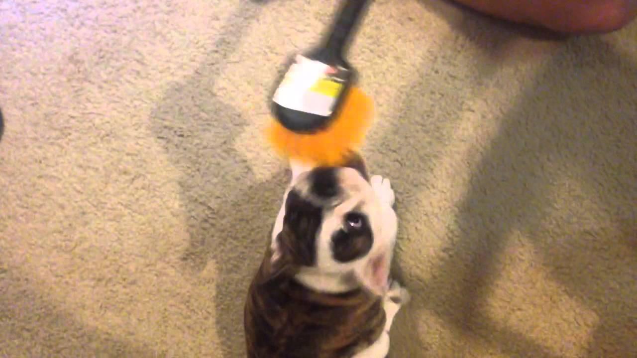 Agnes loves the utility brush