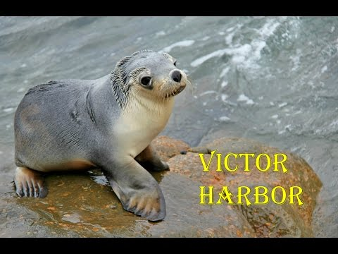Victor Harbor - South Australia