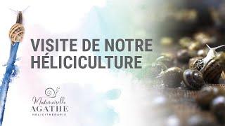 Visite de notre héliciculture à Albon