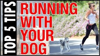 Video Best 5 tips for running with your dog !! dog run over download MP3, 3GP, MP4, WEBM, AVI, FLV November 2017