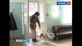 Владельцев незарегистрированных собак ждут штрафы, 2014 г.