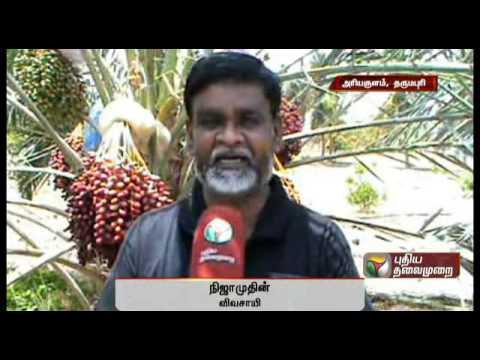 Profitable Farming Of Dates