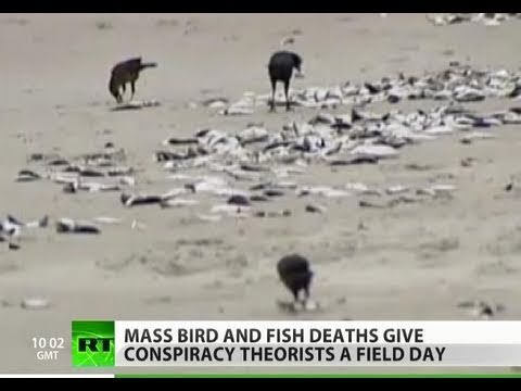 Planet Toxic? Mass animal deaths sweep globe