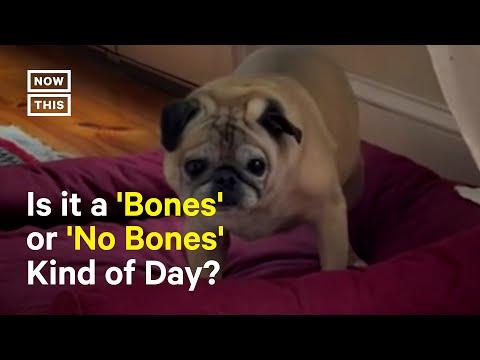 The Tiktok Pug Deciding the Fate of Everyone's Day