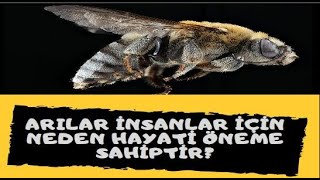 Arılar Neden İnsanlar İçin Hayati Öneme Sahiptir?