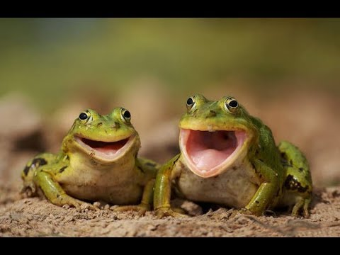 Funny Screaming Frog Compilation