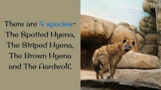 16 Unknown Things You Should Know About Hyena