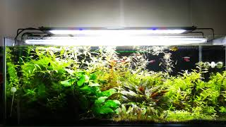 Las Algas como Bioindicadores en nuestro acuario Plantado