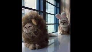 Video Divertenti Di Cani E Gatti Pazzi