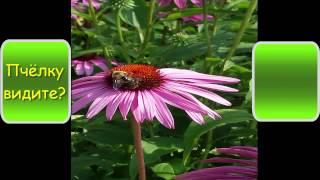 Невероятно красивые осенние цветы, цветы букеты самые красивые, Most beautiful flowers