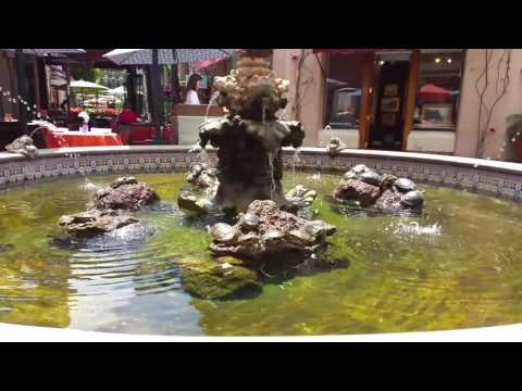 Turtles in old town Santa Barbara