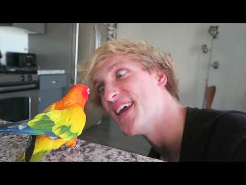 R.I.P Maverick The Parrot (Tribute Video) 2013 – 2019