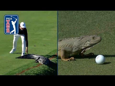Gators. Snakes. Dragons?! Best reptile encounters on PGA TOUR