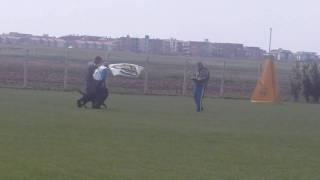 Huck Dei Re Magi -  Ipo1  Sez.c - Prova Rottweiler Club Italiano  Roma  17.04.2011