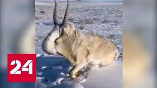 Сибирские морозы бьют рекорды - Россия 24