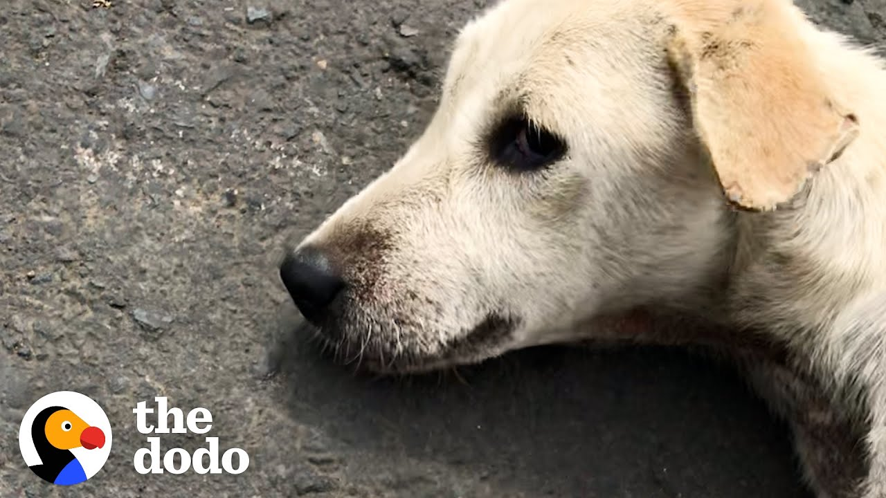 Dog Found Lying In Road Turns Into A Playful Puppy  | The Dodo Foster Diaries