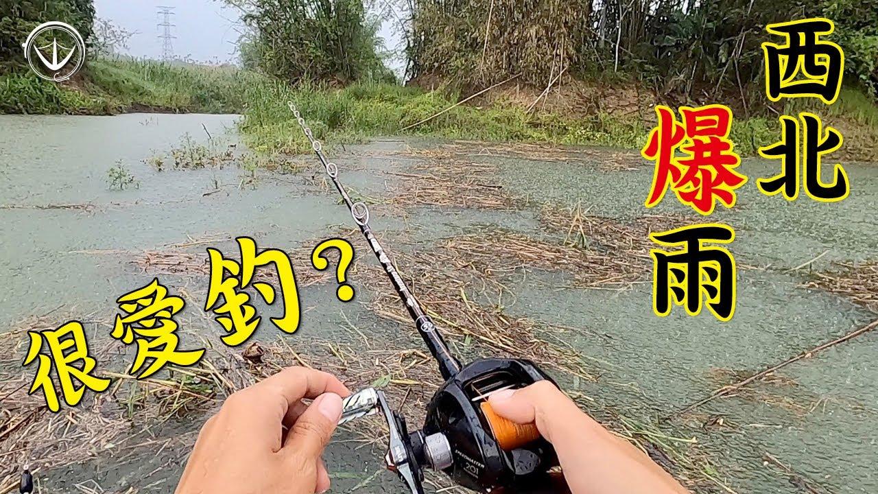 悲劇了!狂咬不中是魚虎日常?突然暴雨是夏季日常?#鵝大人 #路亞 #魚虎