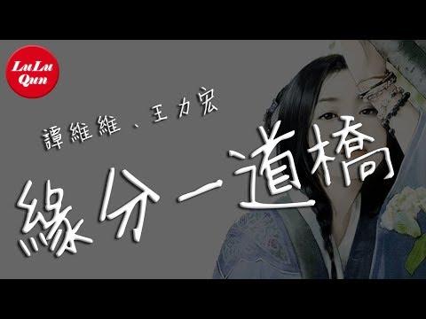 抖音《緣分一道橋》譚維維、王力宏【動態歌詞Lyrics】
