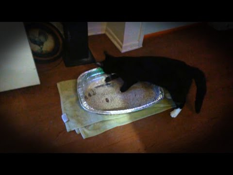 Turkey Pans Are For Turkey, Not Cat Poop