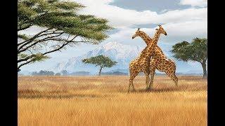 Природные зоны Африки. География 7 класс.