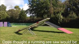 Spring See Saw Dog Agility Training 2 On 2 Off