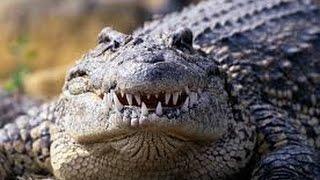 Самые опасные животные Австралии.(Самые опасные животные Австралии. В видео представлены самые опасные животные Австралии. Австралия очень..., 2015-05-20T09:20:46.000Z)