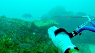 2015年11月22日。九州某島で魚突き。クエを突いたが痛恨のバラシ。その...