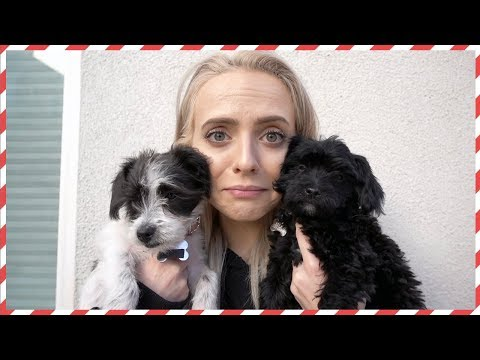 Taking Our Puppies To The Vet - Vlogmas Day 12