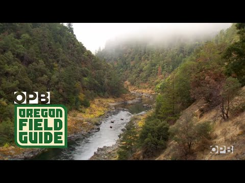 Running A Wild Oregon River In A Wooden Drift Boat