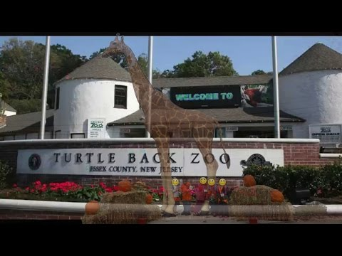 School Trip: Turtle Back Zoo Part 2