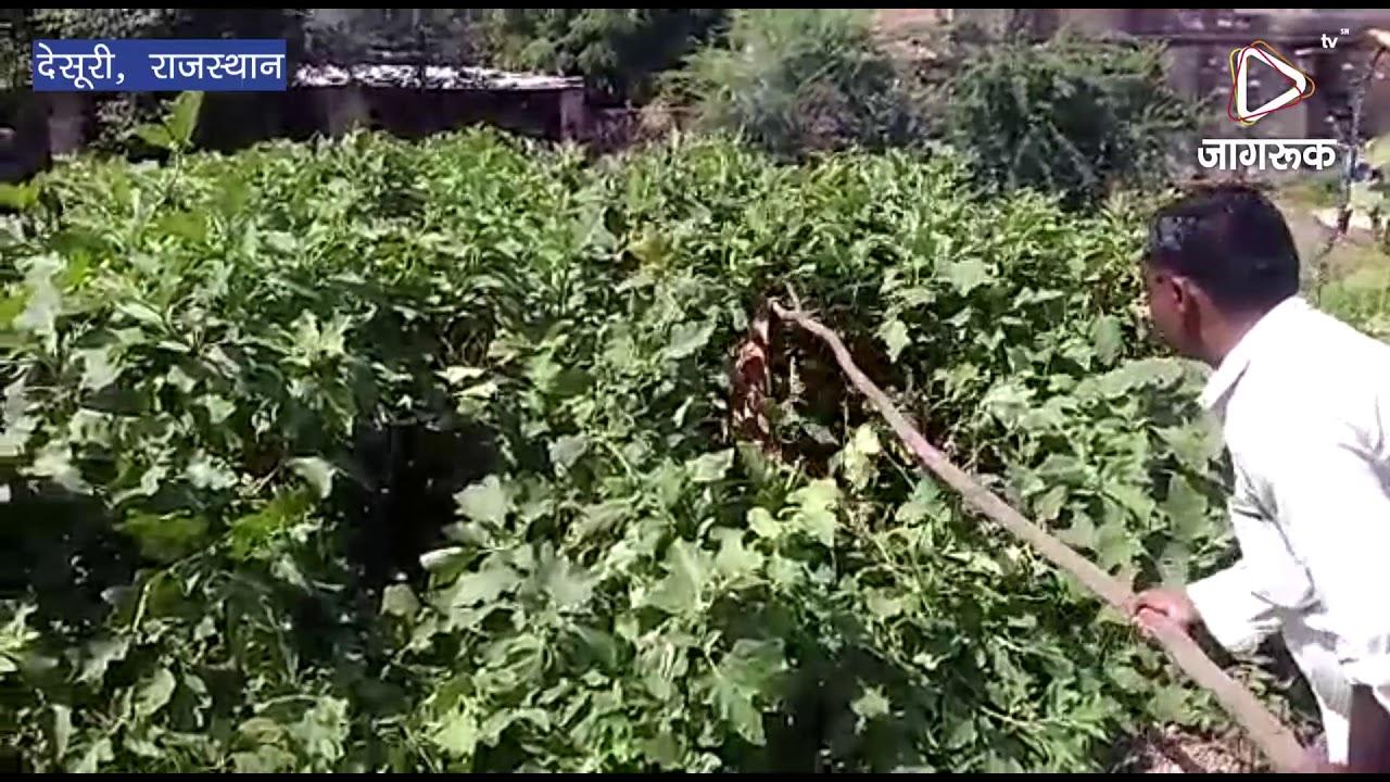 देसूरी में घर के अहाते में घुसे मगरमच्छ को पकड़ा