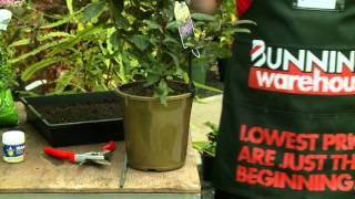 How To Propagate Plants - DIY At Bunnings