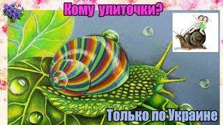 кто хочет купить улитки?  Ахатины, архахатины и другие наземные моллюски.ТОЛЬКО по УКРАИНЕ!