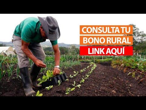 Bono Rural S/760. Conoce aquí si eres beneficiario del bono rural
