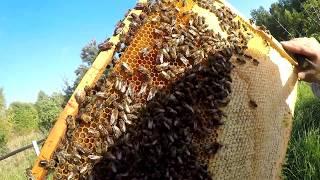 Окончание пчеловодного сезона18 сентября 2017 г.