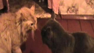 хор мартовских котов