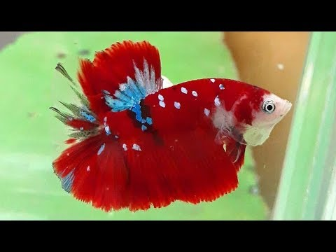 Top 5 Low Maintenance Fishes For Beginners | Animal Beast