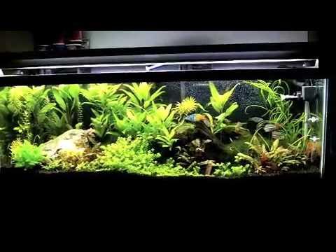Planted aquarium diy co2 mix youtube for Aquarium co2