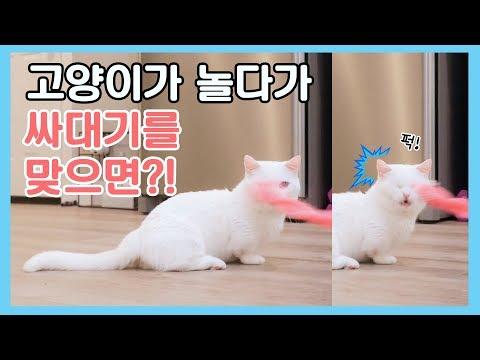 고양이랑 놀다가 실수로 싸대기를 때리면 어떻게 될까?