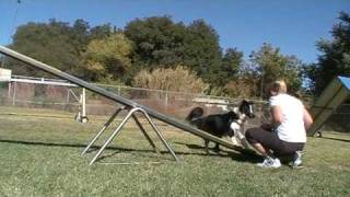 Dog Agility Training Tips - The Bang Game