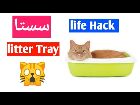 Cheap Cat Litter Tray 😵   Life Hacks For Cat Owners   DIY   Cat Life Hacks   CHUBBY MEOWS