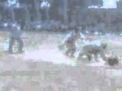 lakhpur tourament kukhar mukabaala
